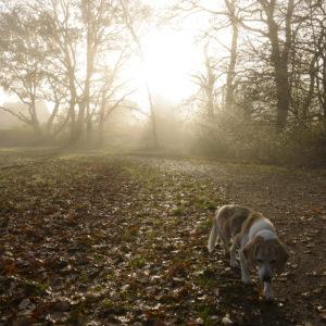 Nebel im Park mit Hund Lara