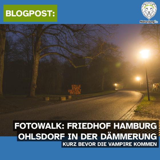 Fotowalk: Friedhof Hamburg Ohlsdorf in der Dämmerung